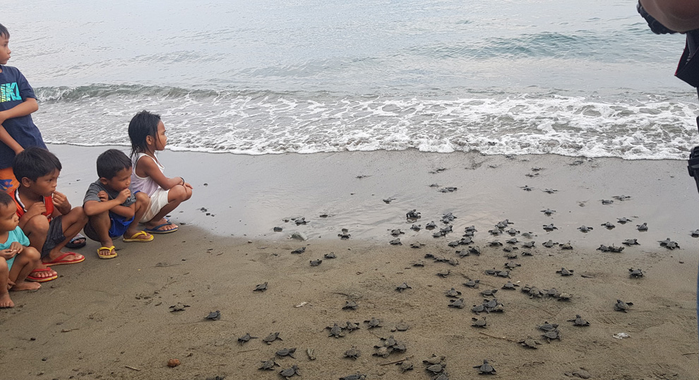 DENR spearheads release  of 528 pawikanhatchlings in Saranggani Bay